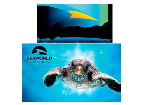 team-national-image-seaworld-carousel